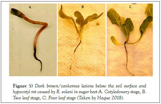 Agricultural-Biological-Cotyledonary