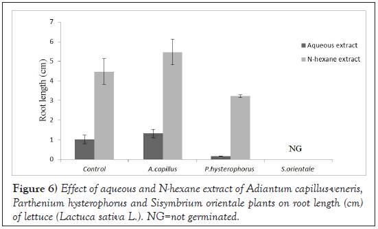 Agricultural-Biological-Sisymbrium